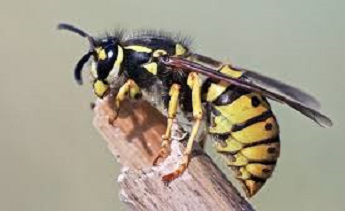 wasp on twig